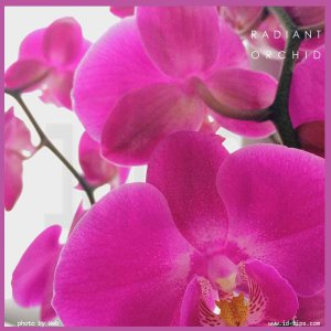 0-orchid