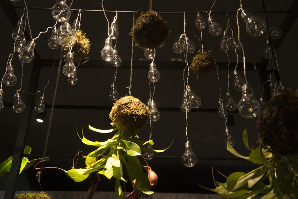 Illuminazione Per Negozio Di Fiori : Illuminazione per negozio di fiori: redesign scegliere le luci per