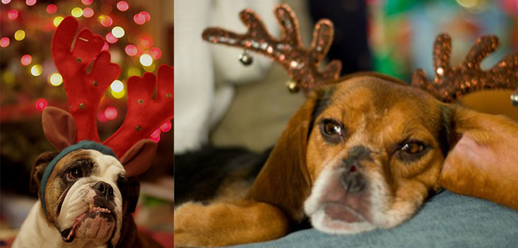 A Christmas carol: cani con le corna da renna